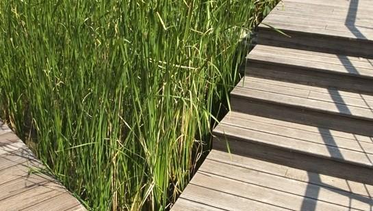 Timber Construction Bamboo Decking 12